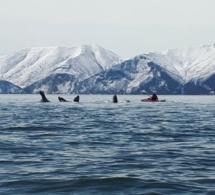 Wave-ski Surfing : Retour de Paul JOUET en compétition !